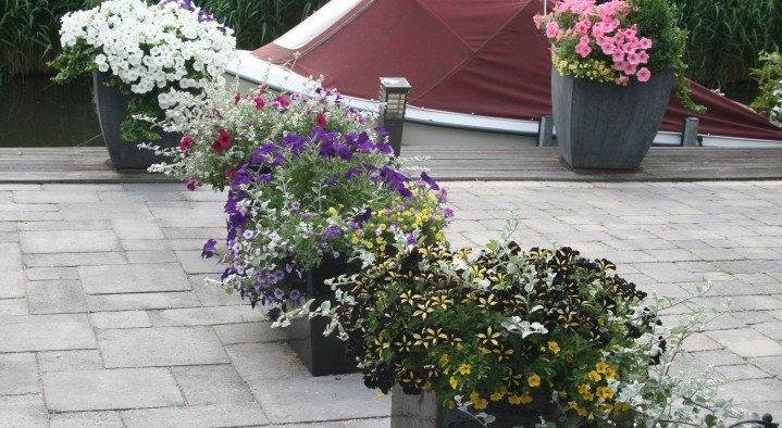 Flower power in the summer  Bed & Breakfast Amsterdam-Landsmeer Noorderbreek 58 Landsmeer
